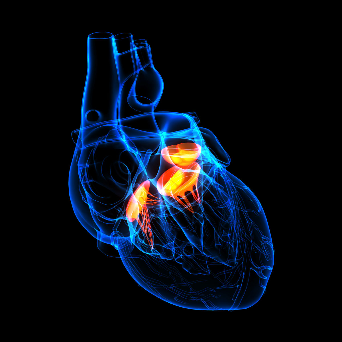 bigstock-d-render-Heart-valve-side-v-52863799-1-1200x1200.jpg